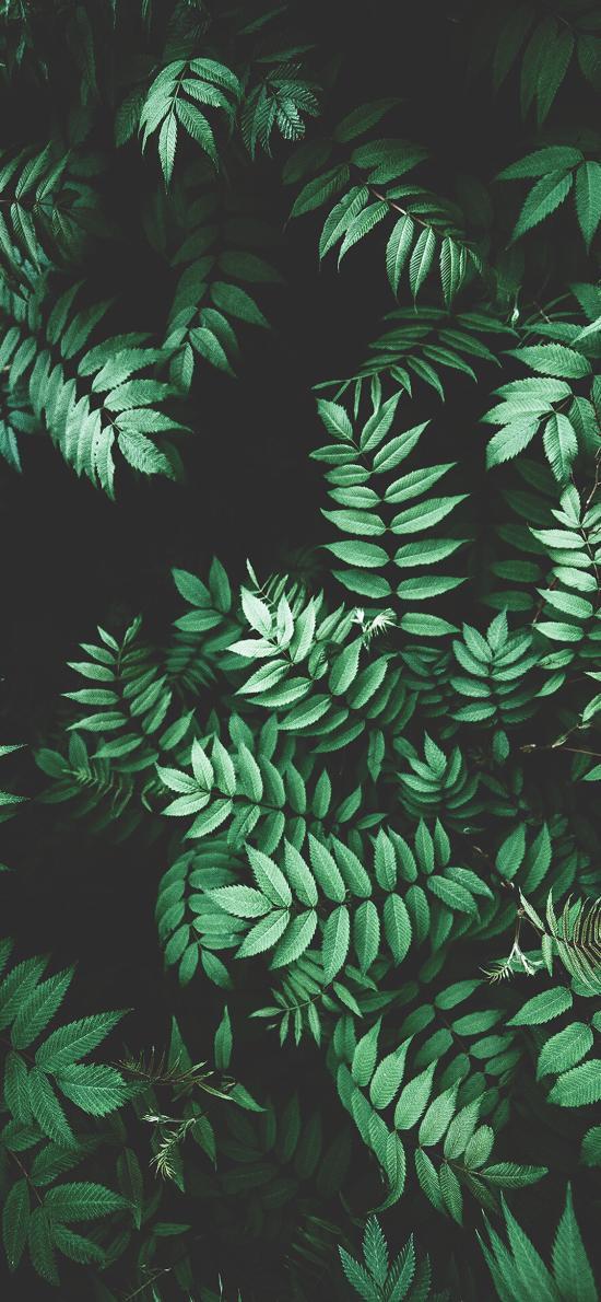 枝叶 绿叶 生长 绿化