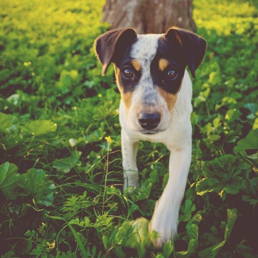 小狗 户外 草地 树木