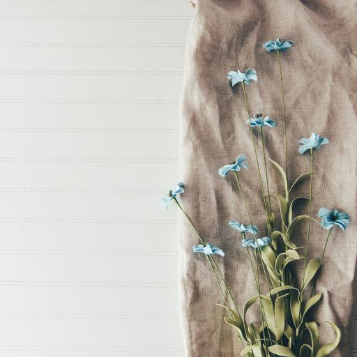 鲜花 蓝色小花 小清新