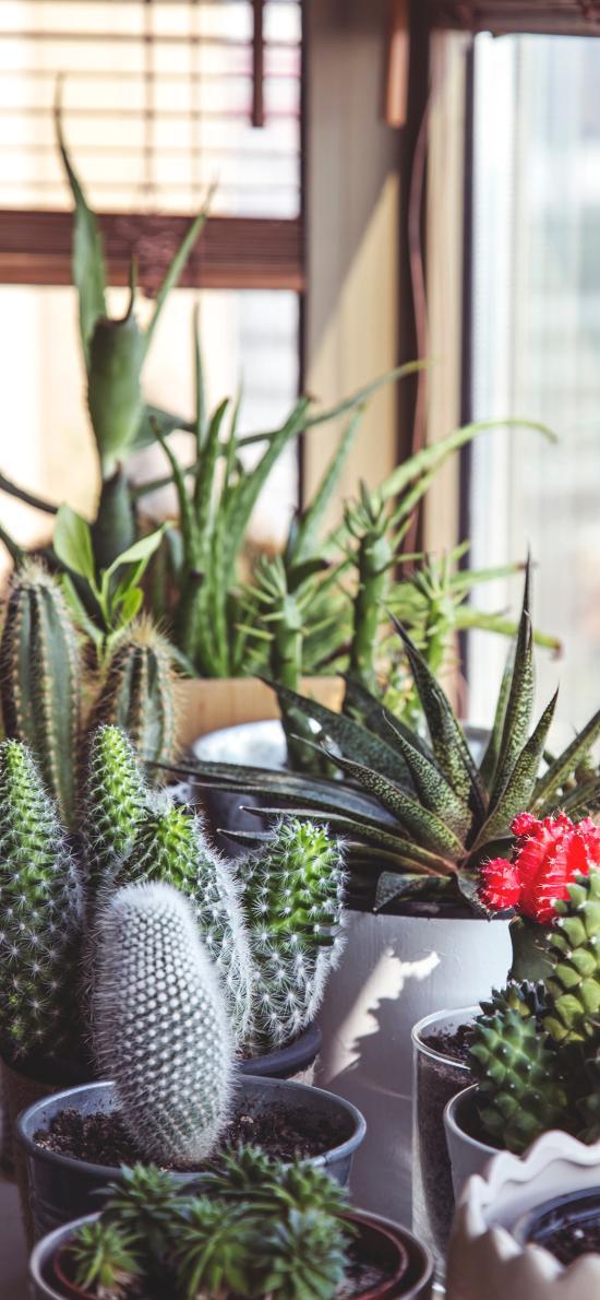 盆栽 花瓶 绿植 仙人掌