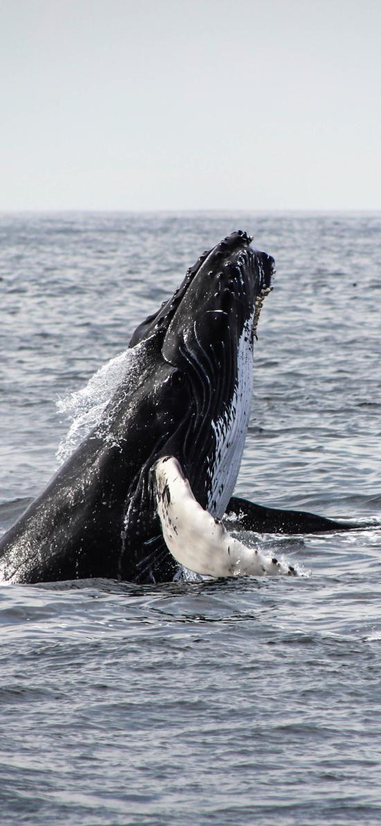 大海 虎鲸 鲸鱼 保护动物