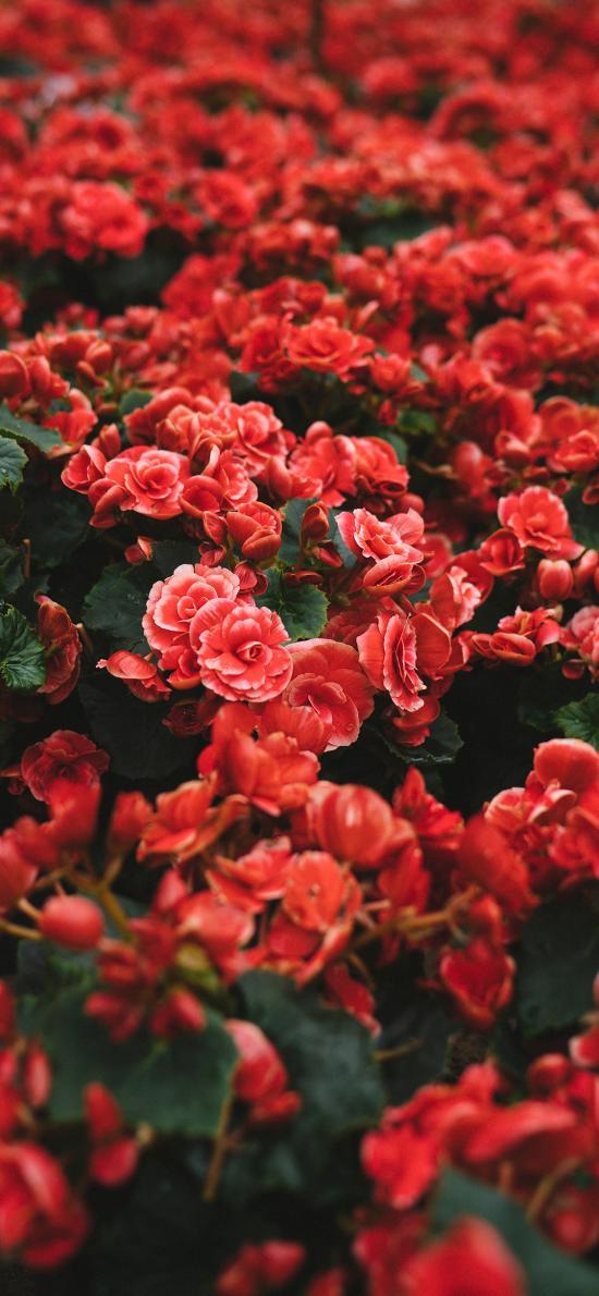 鲜花 鲜艳 密集 盛开