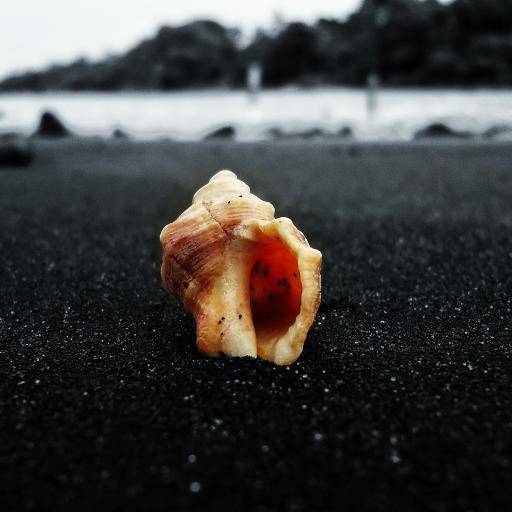 海岸 海螺 海岸 沙滩 壳