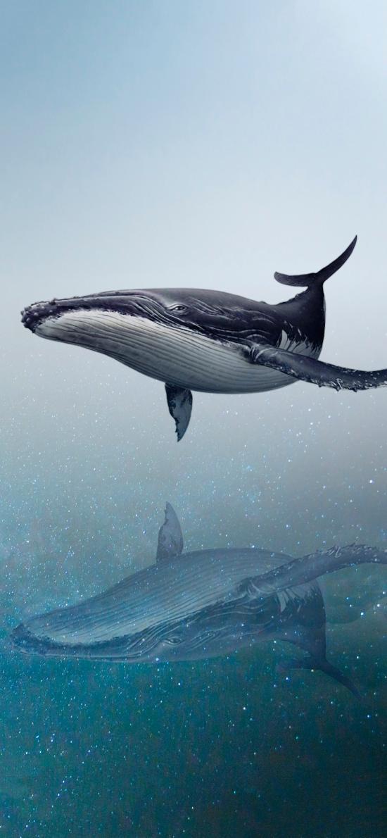 鲸 海洋生物 游动 对称 唯美 大海 梦境