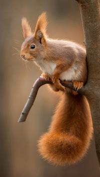 松鼠 树枝 栖息 可爱