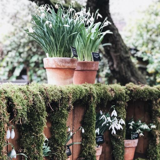 绿植 盆栽 墙头