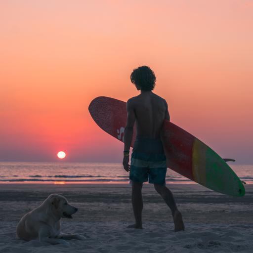 滑板 夕阳 狗子 沙滩