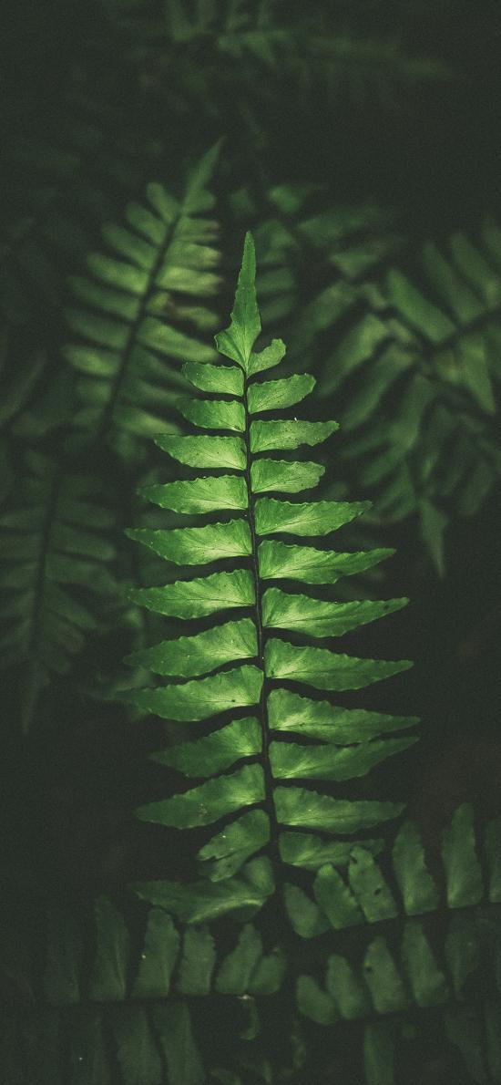叶子 绿色 枝叶 护眼 绿化