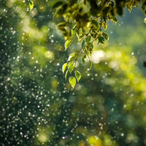 雨水 节气 阳光 绿叶