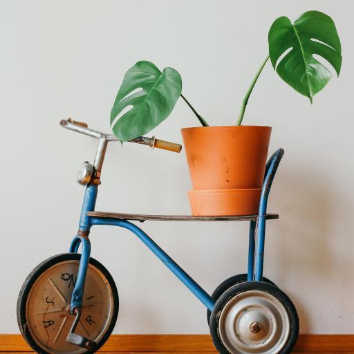 龟背竹 叶子 花盆 小单车 创意