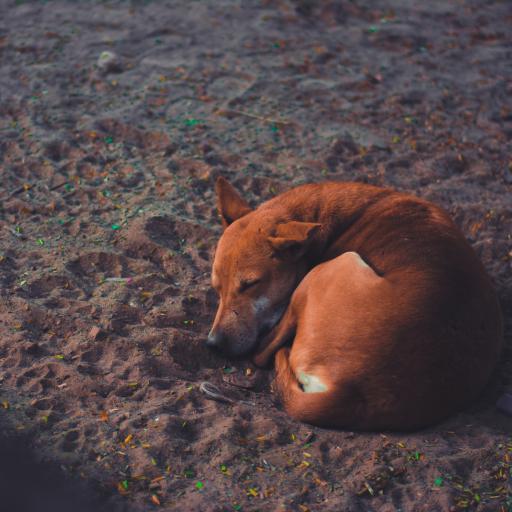 犬类 蜷缩 睡眠 沙地