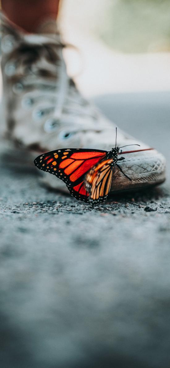 蝴蝶 昆虫 鞋子 路面