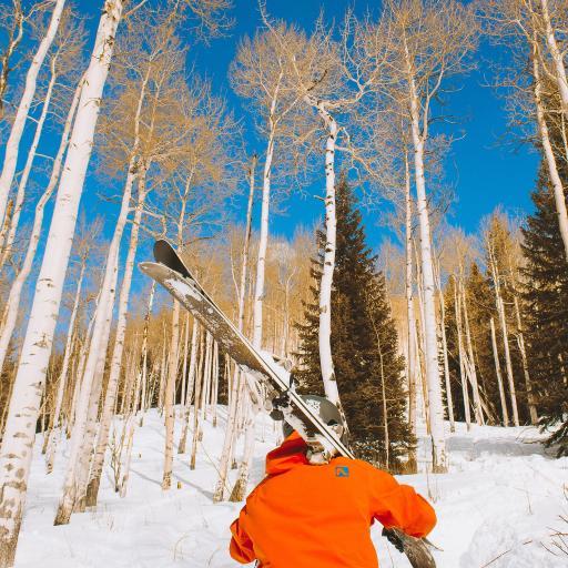 男子 背影 树林 滑雪板