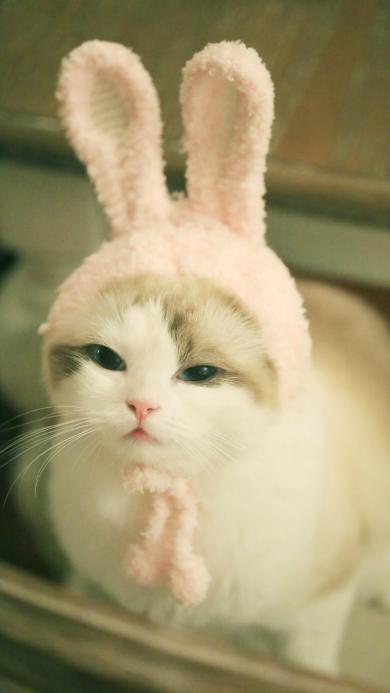 猫咪 兔耳朵 可爱 喵星人 宠物