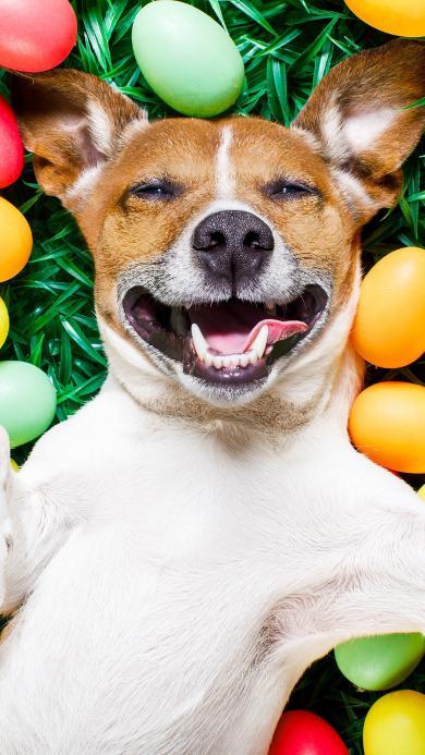 狗 欢乐 犬 汪星人 宠物