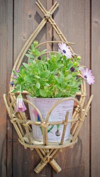 绿植 花盆 花 创意