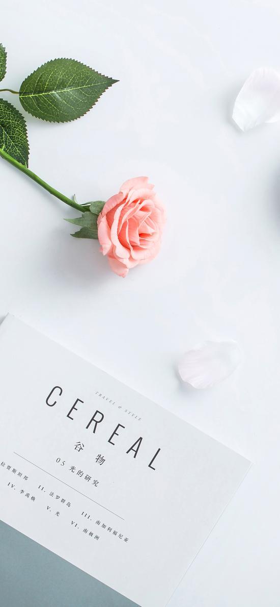 静物 玫瑰 杂志 花瓣