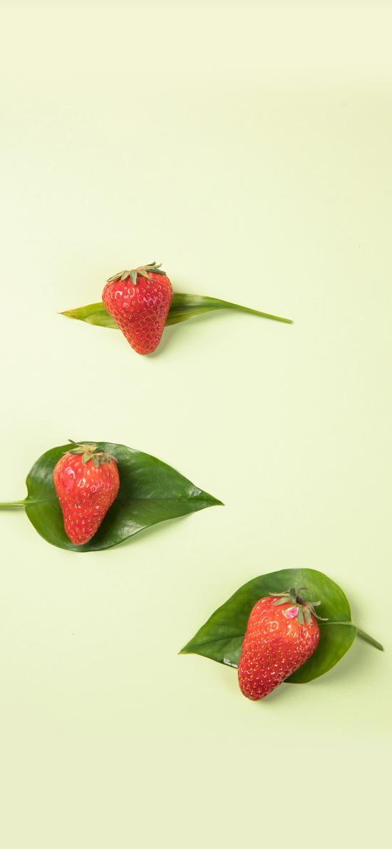 草莓 水果 营养 叶子