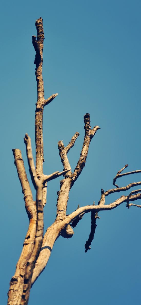 樹干 枯木 藍天 樹木