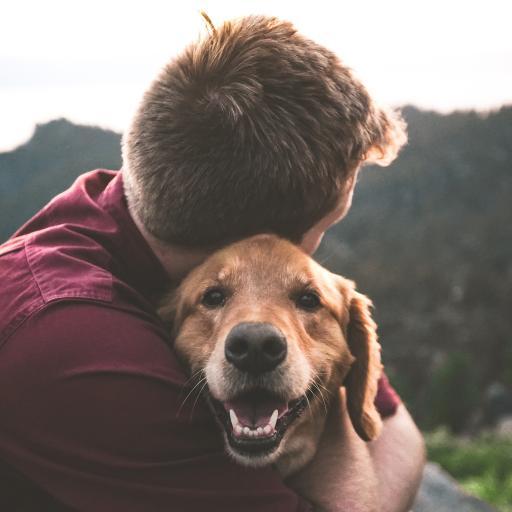 主人 情感 宠物 狗