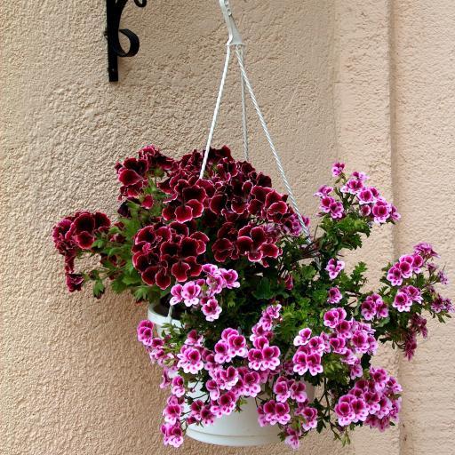 花瓶 垂吊 鲜花 盛开 墙壁