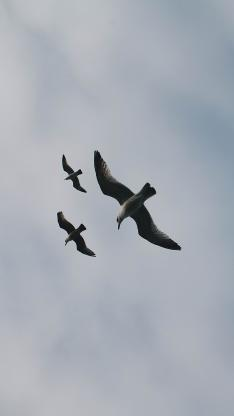 鸟 飞翔 天空 展翅高飞