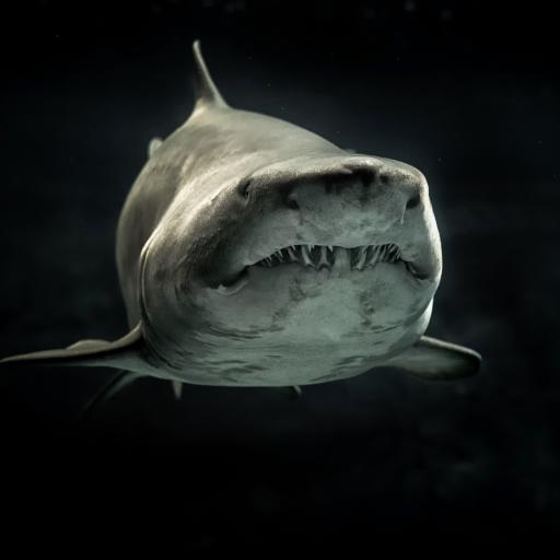 鲨鱼 凶猛 海洋生物 尖牙