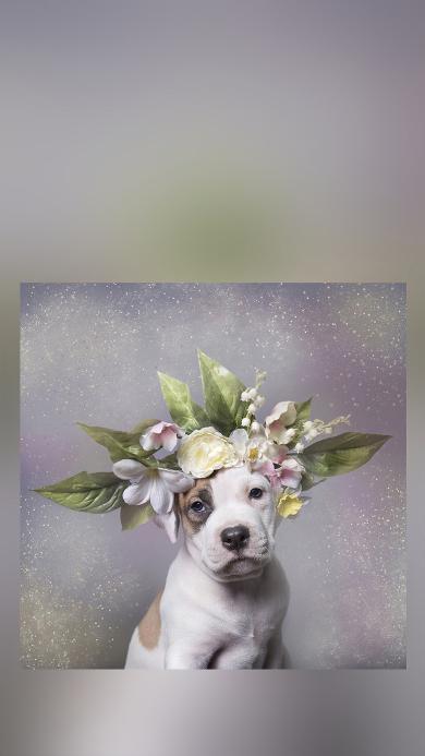 狗 花环 枝叶 宠物 可爱