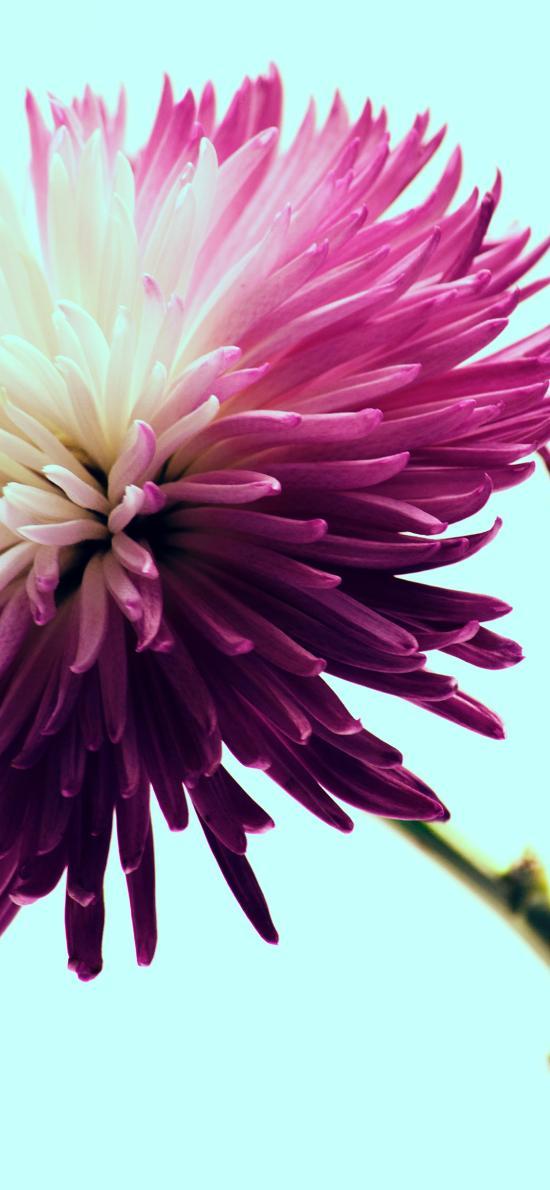 鲜花 花朵 花瓣 盛开