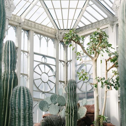 花室 绿植 仙人掌 玻璃房