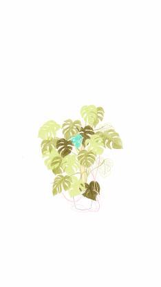 盆栽 色彩 龟背竹 简约