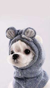 小狗 宠物 可爱 大眼 衣服