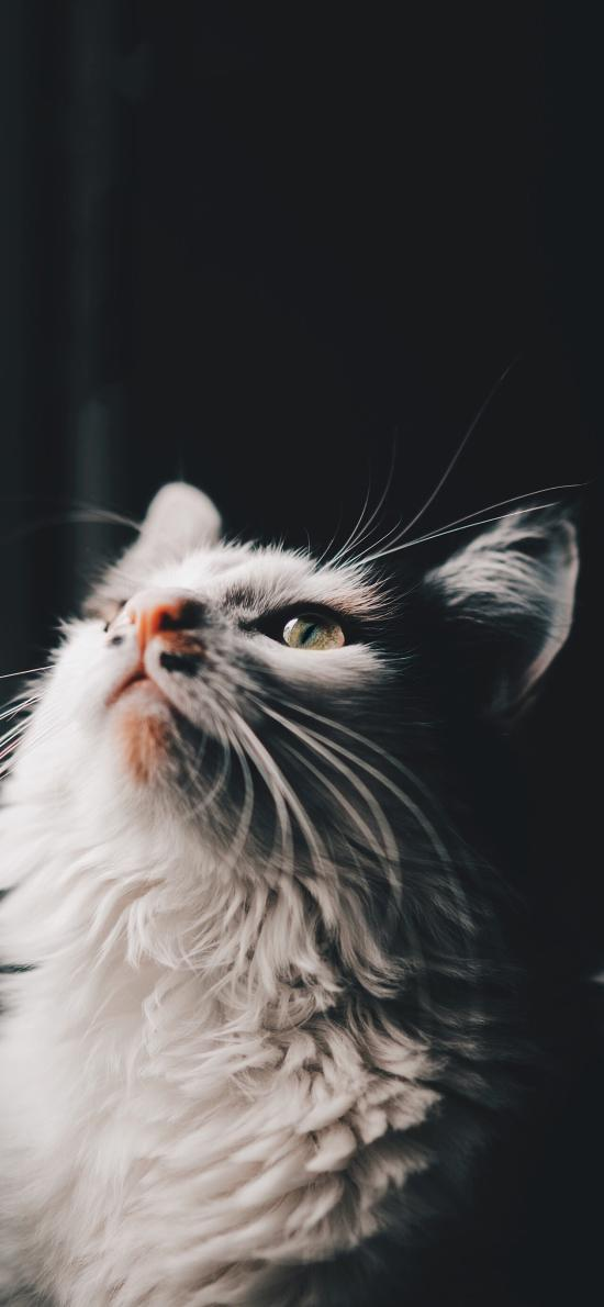 宠物猫 喵星人 抬头 可爱