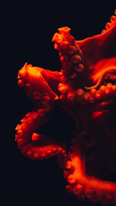 章鱼 八爪鱼 吸盘 海洋生物 软肢