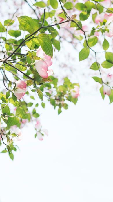 枝叶 春意黯然 鲜花