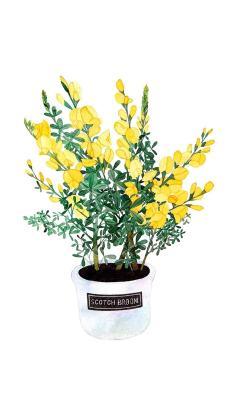 手绘 鲜花 黄色 绽放