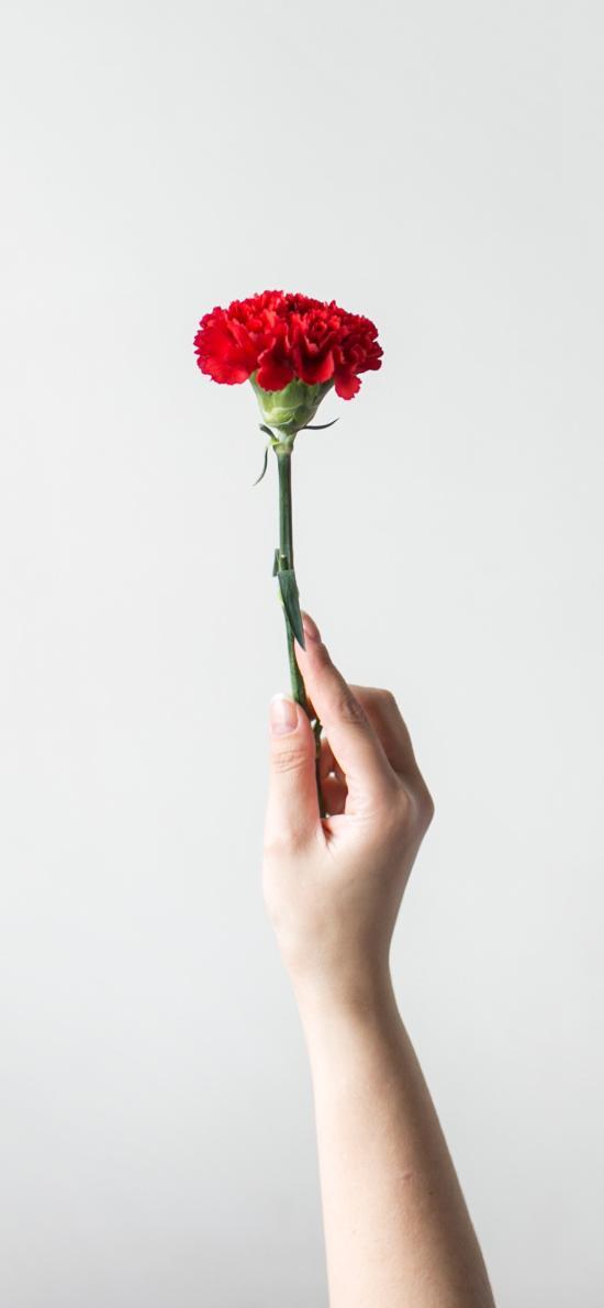 鲜花 盛开 手部 盛开