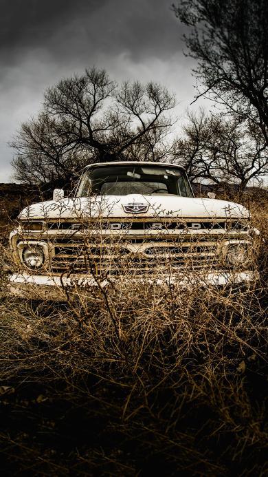 郊外 草丛 汽车 白色