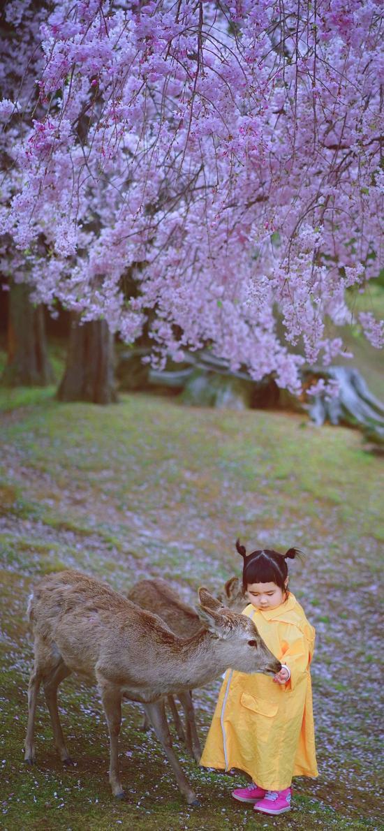 小蛮 小网红 小女孩 儿童 日本 鹿