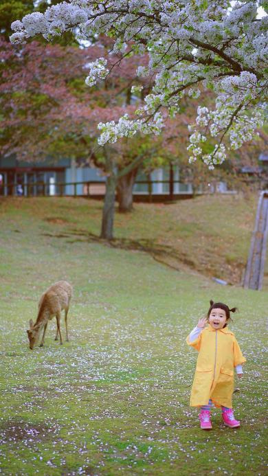 小蛮 小网红 小女孩 儿童 日本 鹿 草坪