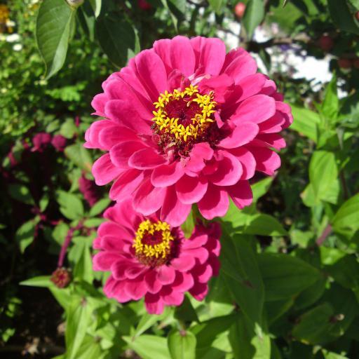 鲜花 盛开 花瓣 花蕊 蜜蜂