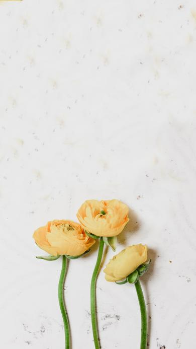 鲜花 花朵 花苞 枝干