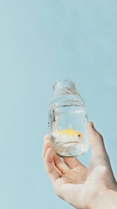 金鱼 蓝色 玻璃瓶 水族 小清新