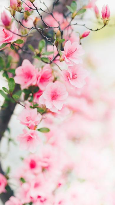 鲜花 枝叶 花瓣 粉