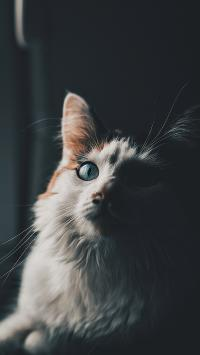 猫咪 皮毛 胡须 宠物