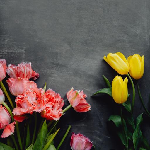鲜花 枝叶 浪漫 郁金香