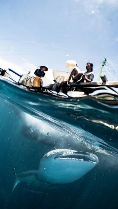 垂钓 大海 海鱼 捕鱼