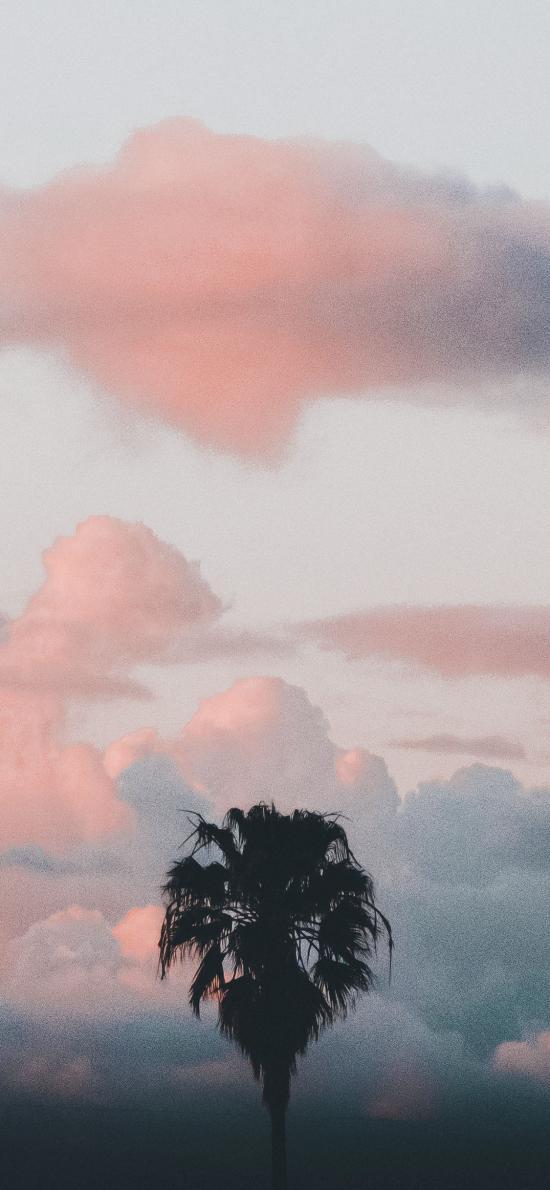 天空 紅霞 火燒云 椰樹