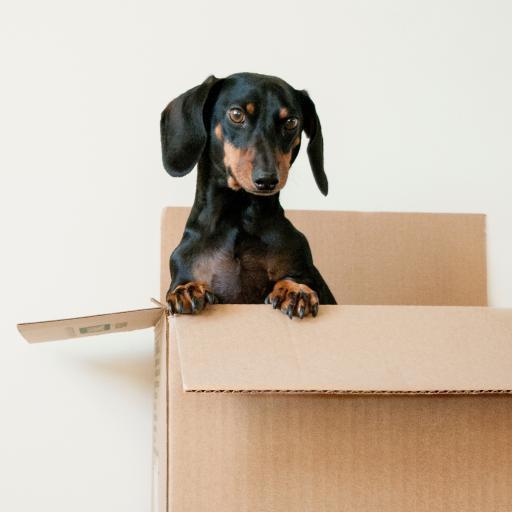 狗子 宠物 纸箱 简约