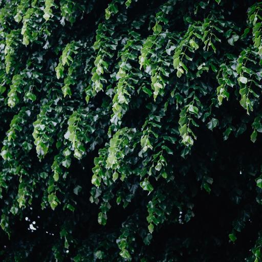枝叶 叶子 绿色 护眼 绿化